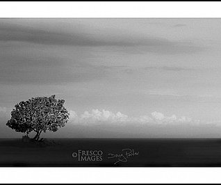 One Tree with Copse - Limited Edition 50
