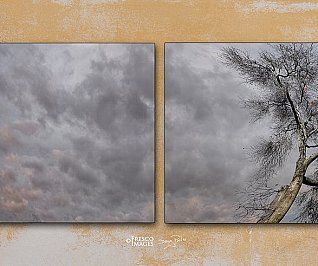 Last Leaves of Autumn (Dyptych)- Limited Edition 25